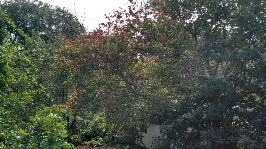 Leaves are just starting to change color in the Northeast (Photo take by Scott Kaplan)